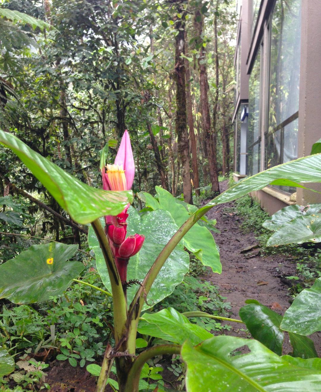 vegetation-florale
