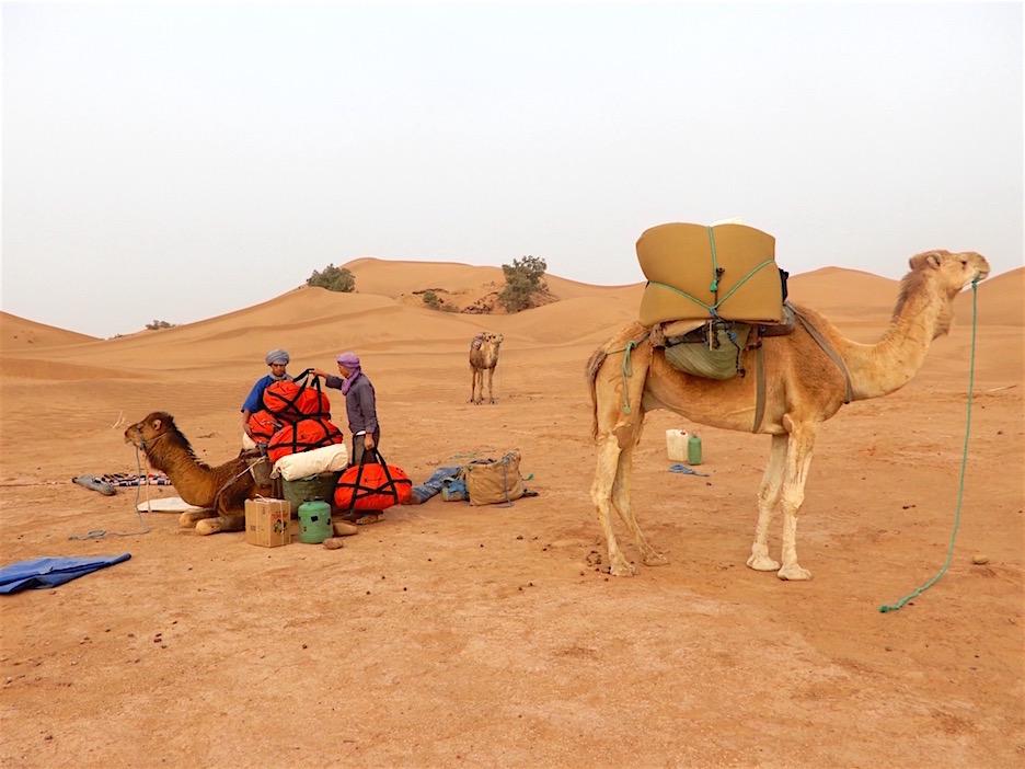 Il est capable de porter environ 300 kilos de bagages sur son dos.
