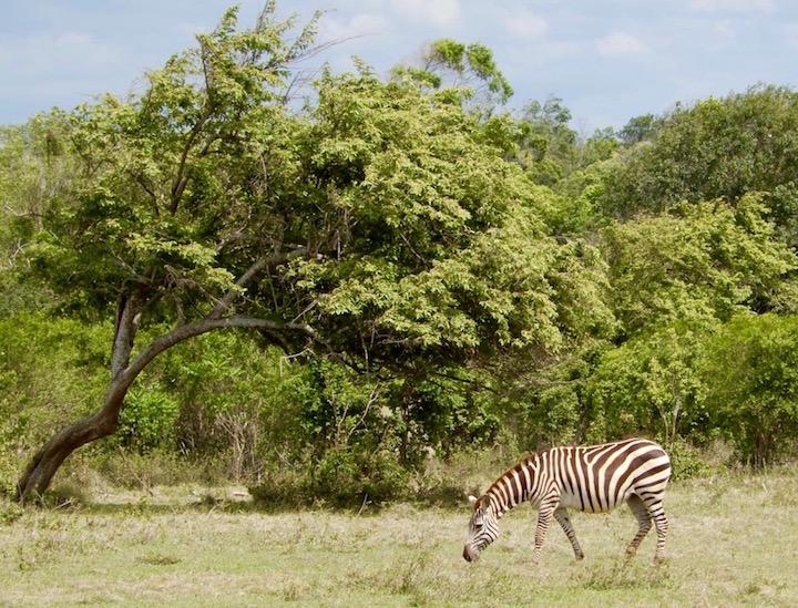 safarizebre