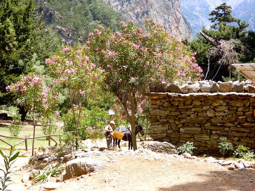 50. Un arrêt après 12 km pour dîner et se reposer à Agios Nicolaos où il y a des toilettes et un poste de garde. S'y trouve aussi les ruines du temple d'Apollon et des cyprès qui ont plus de 2.000 ans